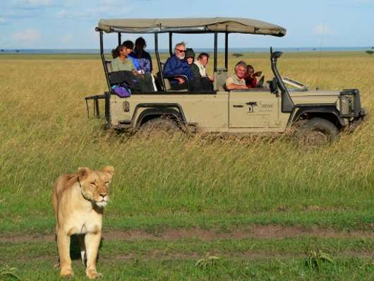safari en África